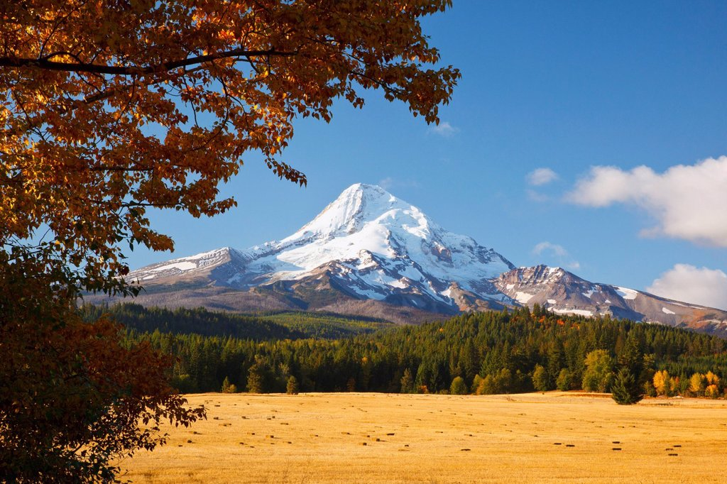 Stock Photo: 1889R-74283 Mount Hood And Autumn Colours In Hood River Valley, Oregon United States Of America