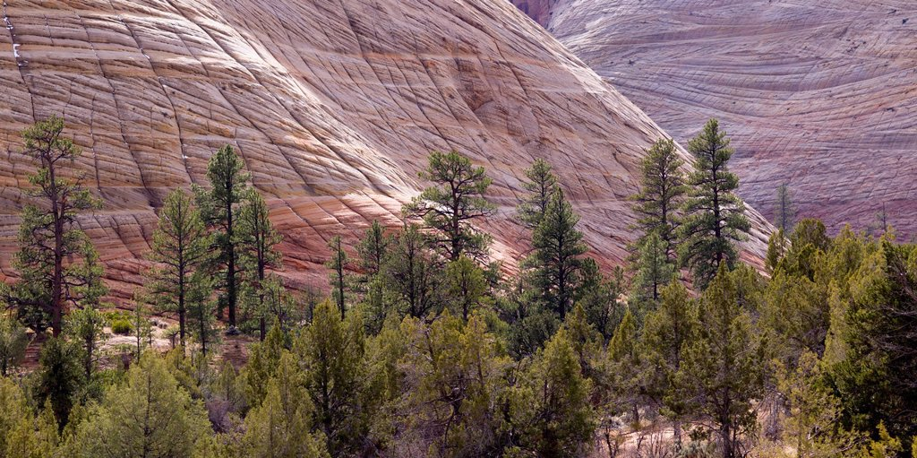Rock Cliffs And Trees In Zion National Park, Utah United States Of America : Stock Photo