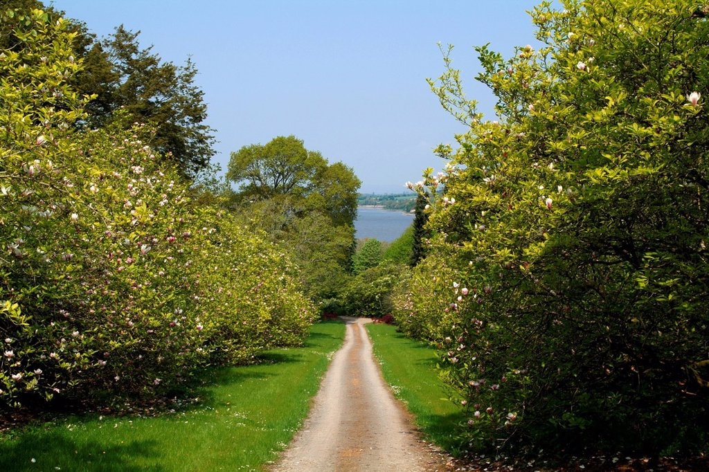 A Dirt Road Lined With Trees At Mount Congreve House And Gardens, County Waterford Ireland : Stock Photo
