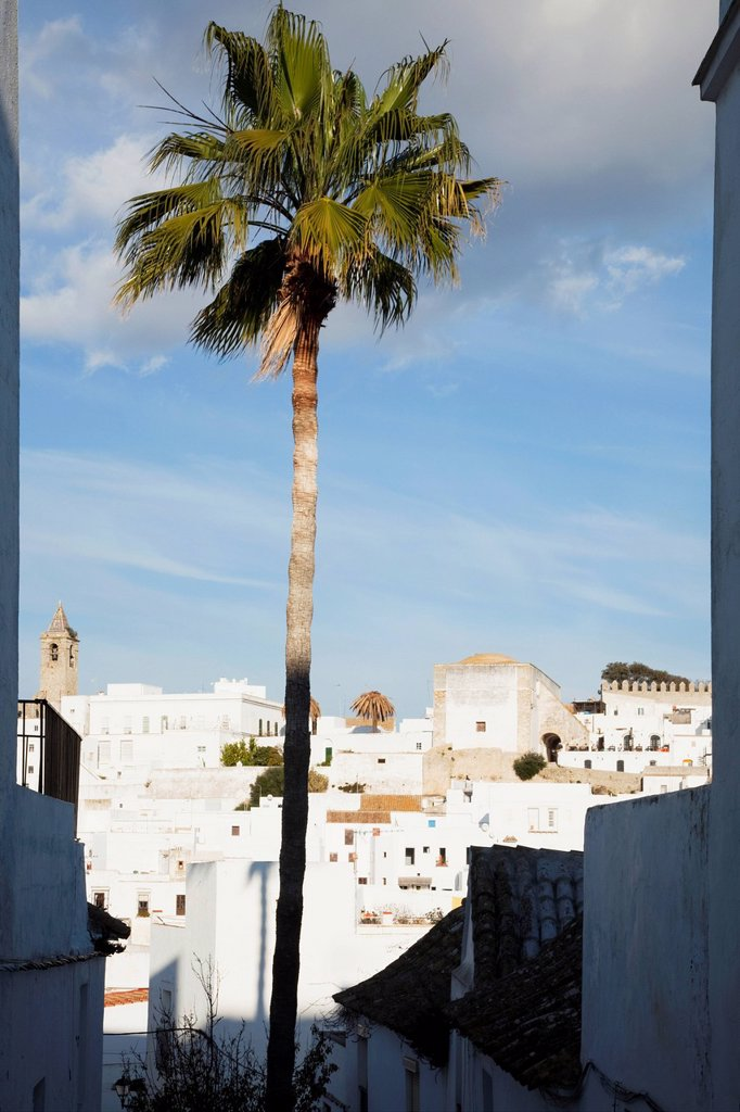 A palm tree and the white buildings of the town, vejer de la frontera andalusia spain : Stock Photo