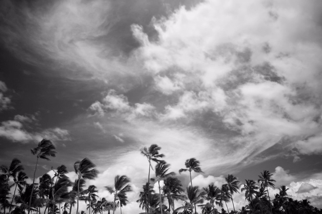 Stock Photo: 1889R-77225 Palm trees and cloud formations, punta cana la altagracia dominican republic