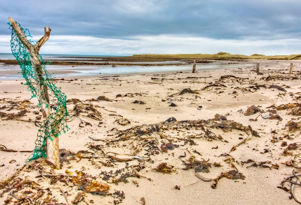 Driftwood and 3 wooden posts on a beach, holy island northumberland england : Stock Photo