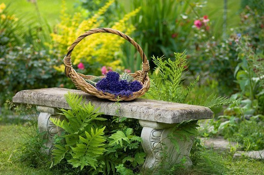 Stone bench with a basket of cut flowers on top, quebec canada : Stock Photo