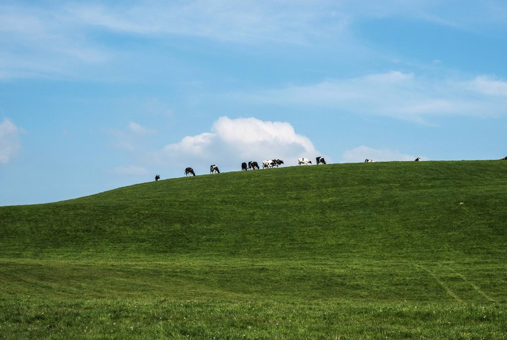 Stock Photo: 1889R-80563 Cows grazing in a field on a hilltop against a blue sky, sedgwick cumbria england
