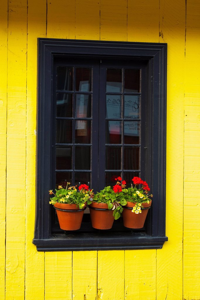 Flower pots on a window ledge, trois_rivieres quebec canada : Stock Photo