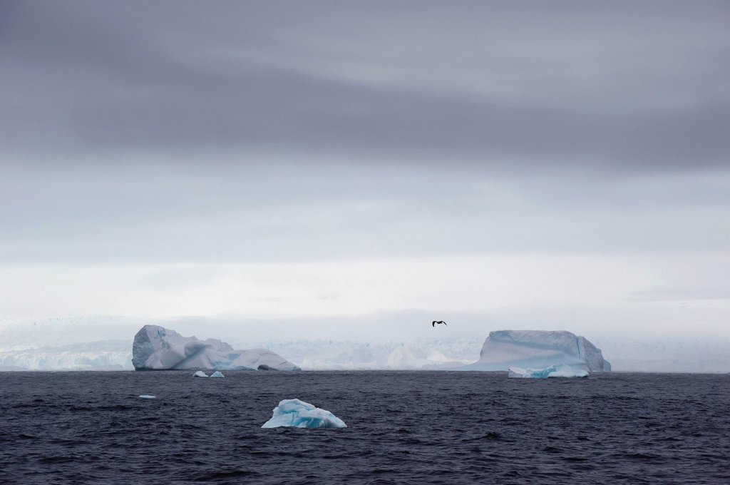 Icebergs in the southern ocean, antarctica : Stock Photo