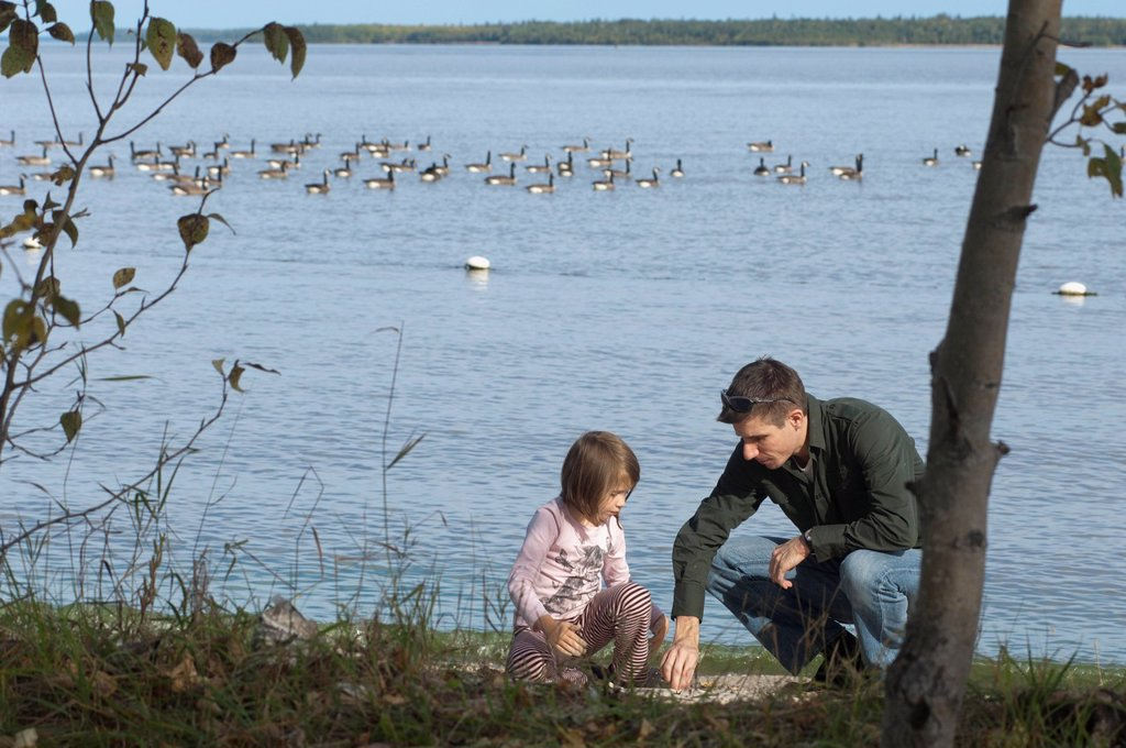 Father and daughter on the shoreline of lake winnipeg with canada geese in the background, winnipeg manitoba canada : Stock Photo