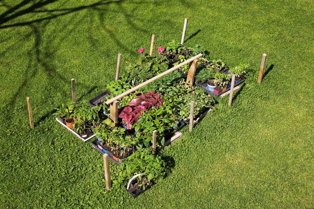 Stock Photo: 1889R-84957 An assortment of plants laid out on the grass lawn ready to be planted in a landscaped residential backyard garden in springtime, quebec canada