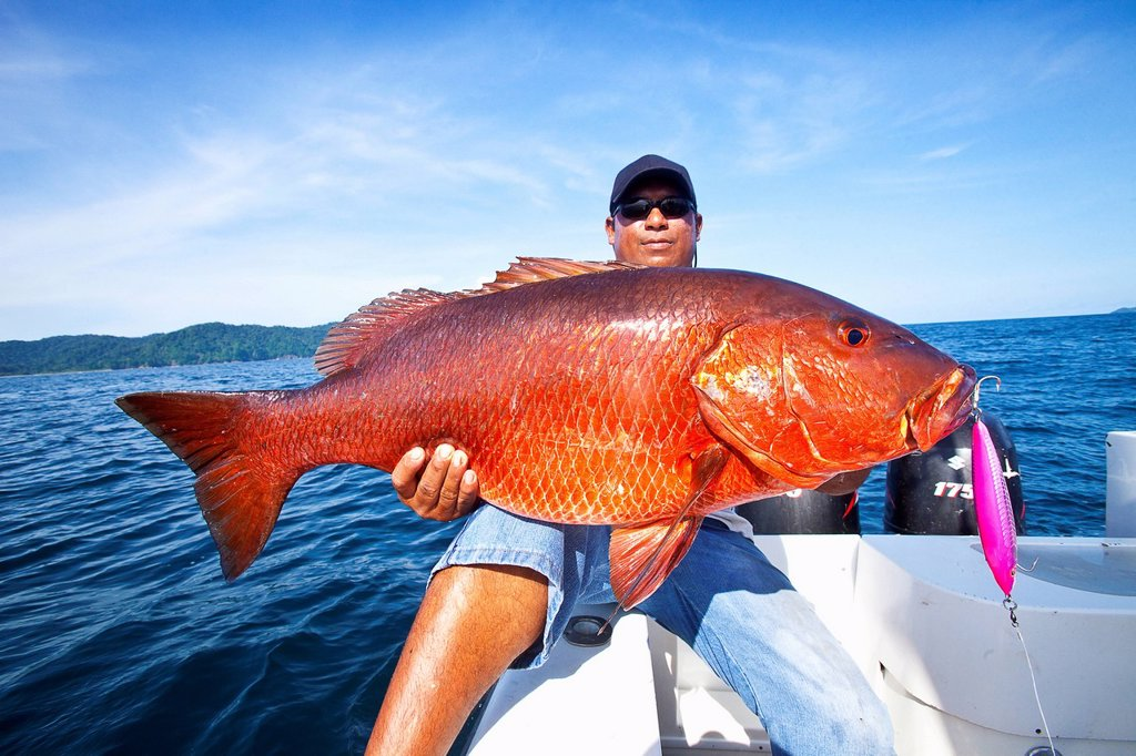Stock Photo: 1889R-85048 Man holding fresh caught cubera snapper lutjanus cyanopterus, panama
