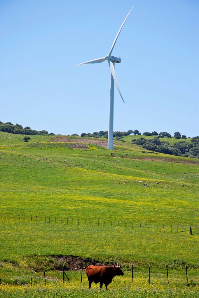 Wind Turbine And Cattle In A Field, Andalusia Spain : Stock Photo
