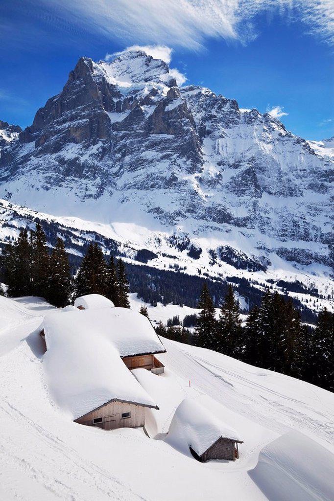 Stock Photo: 1890-100553 Wetterhorn mountain, 3692m, Grindelwald, Jungfrau region, Bernese Oberland, Swiss Alps, Switzerland, Europe