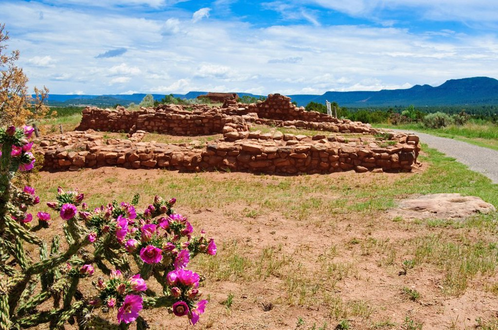 Stock Photo: 1890-100668 Cactus blossoms at Pecos National Historical Park, New Mexico, United States of America, North America