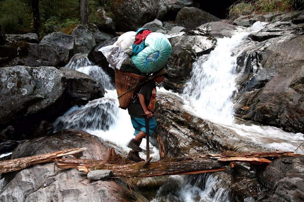 Stock Photo: 1890-101369 A porter crosses a river using a fallen log whilst carrying a heavy load up the Hingku Valley, near Lukla, south of Mount Everest, Nepal Himalaya, Nepal, Asia