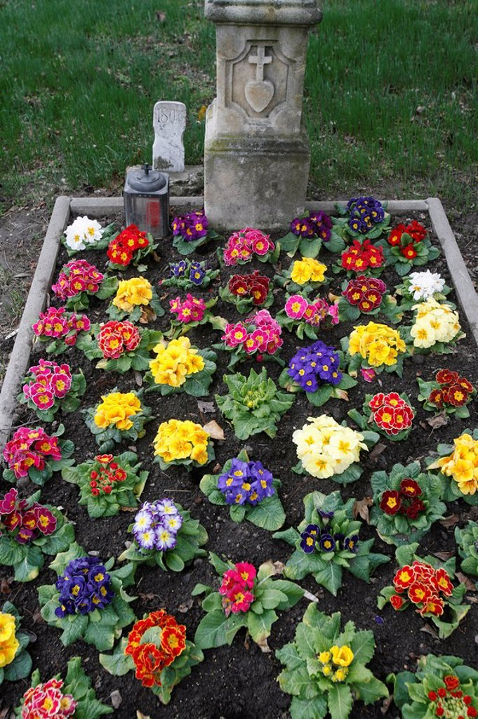 Stock Photo: 1890-102476 Flowers on a grave, Vienna, Austria, Europe