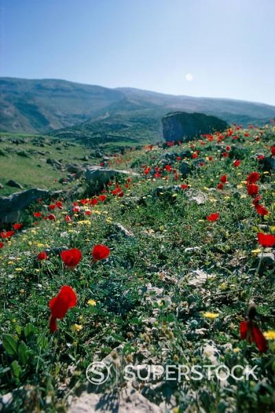 Landscape near Shiraz, Iran, Middle East : Stock Photo