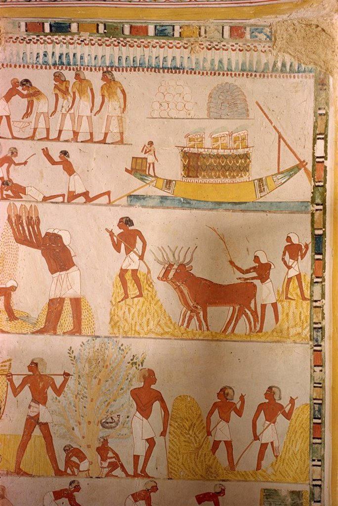 Harvesting scene from the time of the 18th Dynasty land steward Sheikh Aba el Kurna, Tomb of Menna, Thebes, UNESCO World Heritage Site, Egypt, North Africa, Africa : Stock Photo