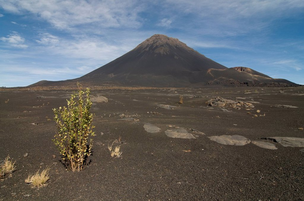 Bush in front of volcano on Fogo, Cape Verde Islands, Africa : Stock Photo