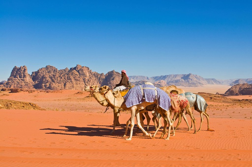 Camel caravan in the stunning desert scenery of Wadi Rum, Jordan, Middle East : Stock Photo