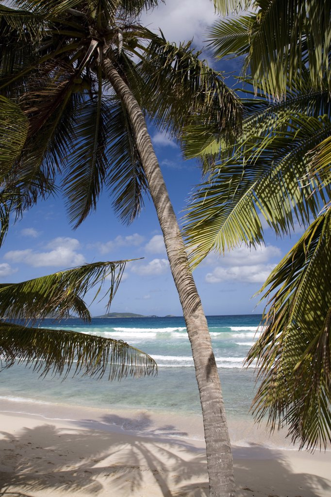 Beach, palm trees and surf in Long Bay, Tortola, British Virgin Islands, West Indies, Caribbean, Central America : Stock Photo