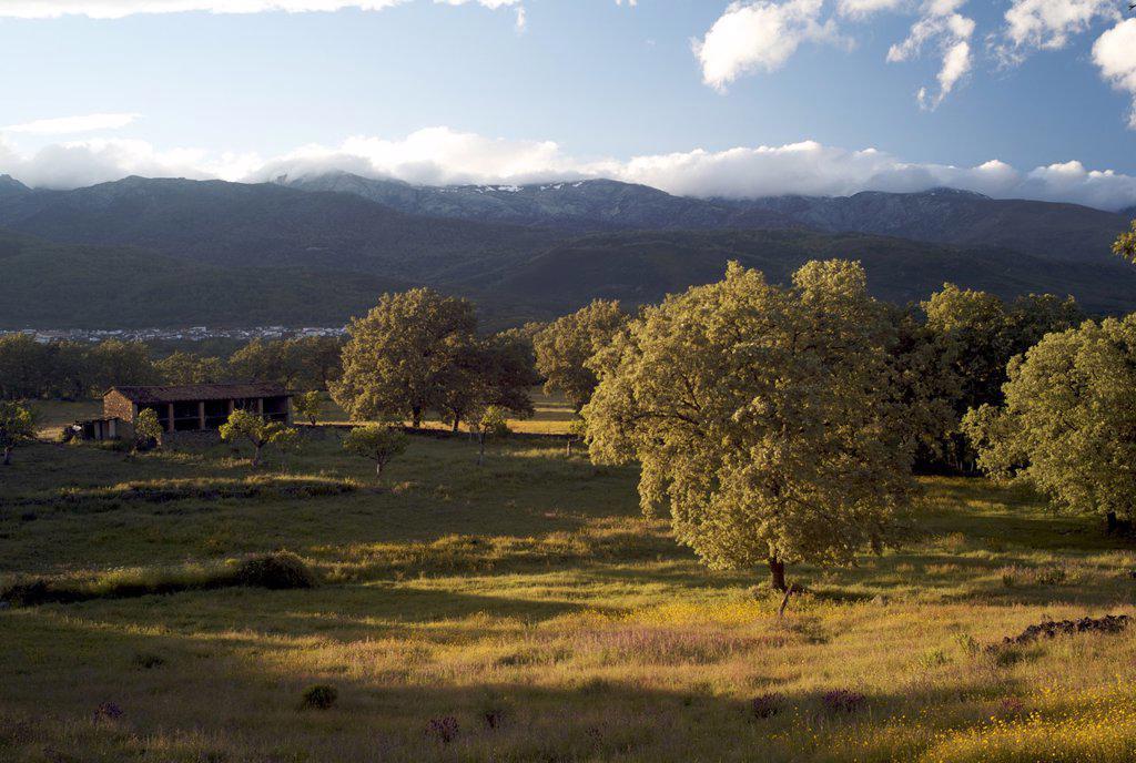 View to Sierra de Gredos, La Vera, Extremadura, Spain, Europe : Stock Photo