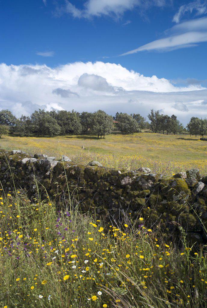 Stock Photo: 1890-115701 Landscape near Villanueva de la Vera, La Vera, Extremadura, Spain, Europe