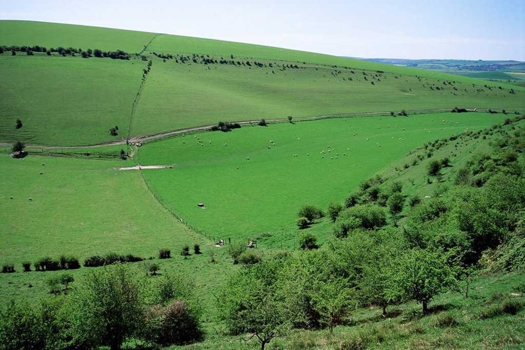 Stock Photo: 1890-11714 The South Downs between Lewes and Glynde, East Sussex, England, United Kingdom, Europe