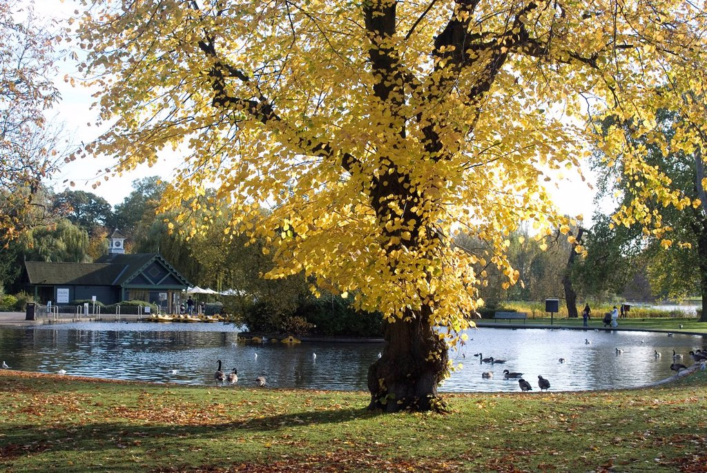 Stock Photo: 1890-122281 Autumn colours near the boat house, Regent´s Park, London NW1, England, United Kingdom, Europe