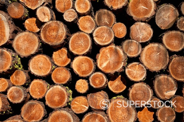 Stock Photo: 1890-127226 Log pile, Val d´Herens, Valais, Switzerland, Europe