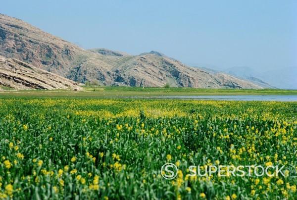 Stock Photo: 1890-1286 Lake Paresham, Iran, Middle East