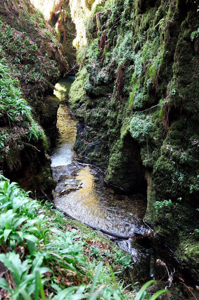 Famous 3 mile gorge in Devon owned by the National Trust, Devon, England, United Kingdom, Europe : Stock Photo
