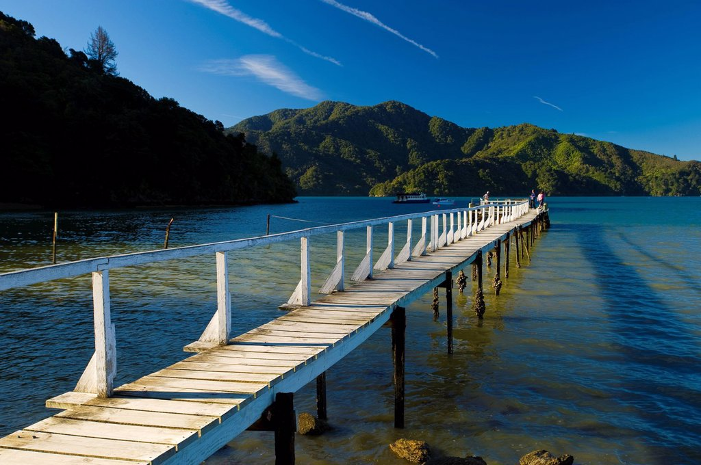 Queen Charlotte Sound, South Island, New Zealand, Pacific : Stock Photo