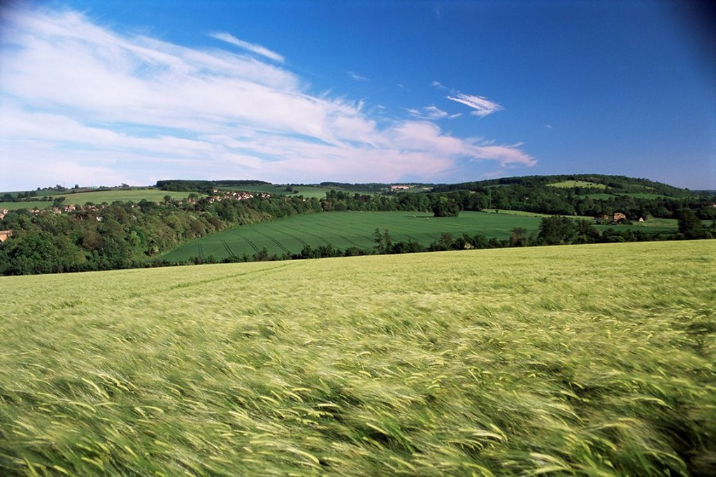 Farmland, Darent Valley, North Downs, near Eynsford, Kent, England, United Kingdom, Europe : Stock Photo