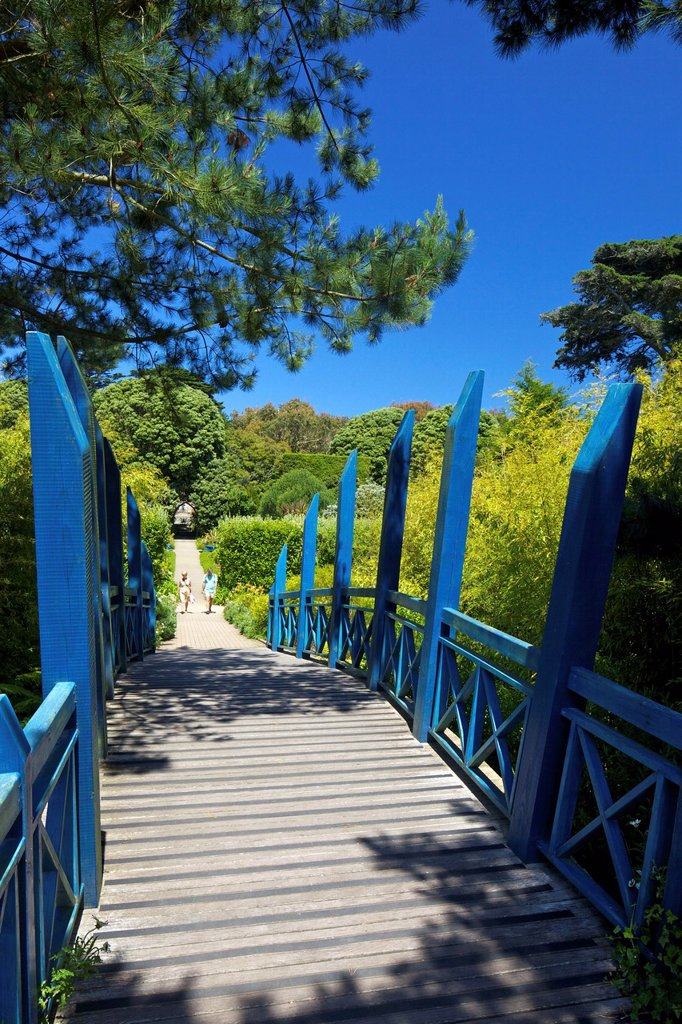 Blue Japanese_style bridge in the sub_tropical Abbey Gardens, Island of Tresco, Isles of Scilly, England, United Kingdom, Europe : Stock Photo