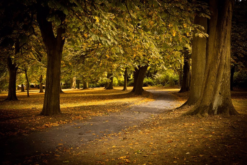 Stock Photo: 1890-144124 Autumn path in Regents Park, London, England, United Kingdom, Europe