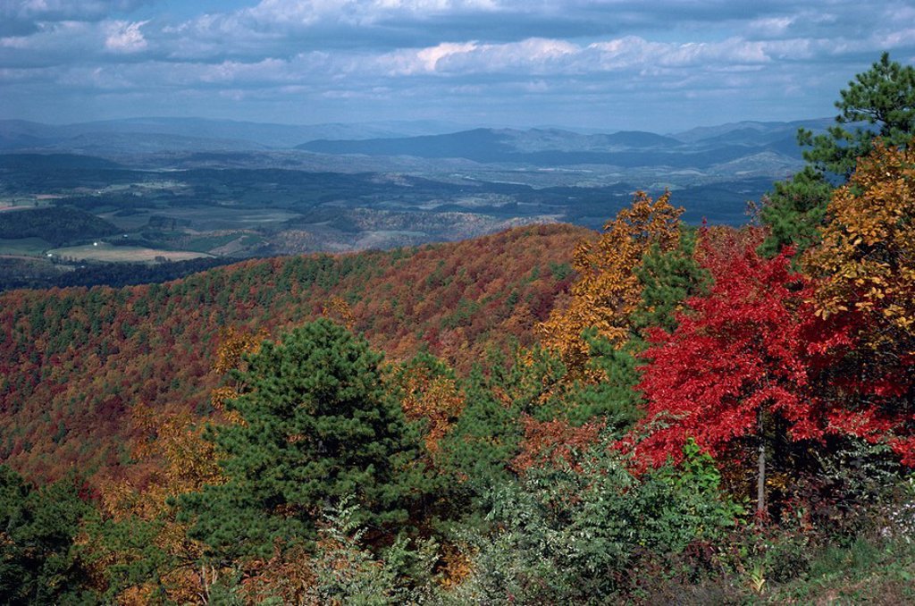 Stock Photo: 1890-14495 Trees in fall colours with agricultural land in the background in Blue Ridge Parkway, Virginia, United States of America, North America