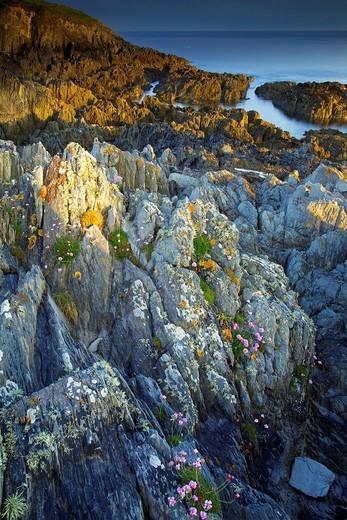 Morte Point, Devon, England, United Kingdom, Europe : Stock Photo
