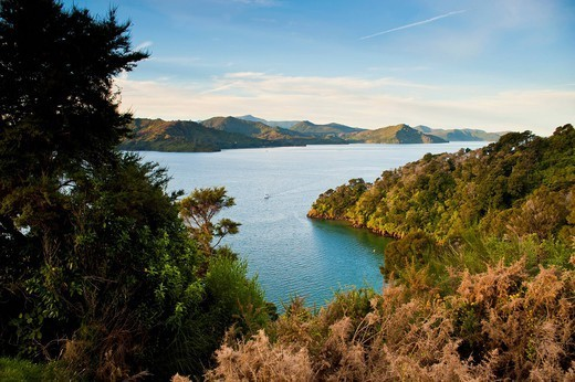 View of a sailing boat in the Queen Charlotte Sound, South Island, New Zealand, Pacific : Stock Photo