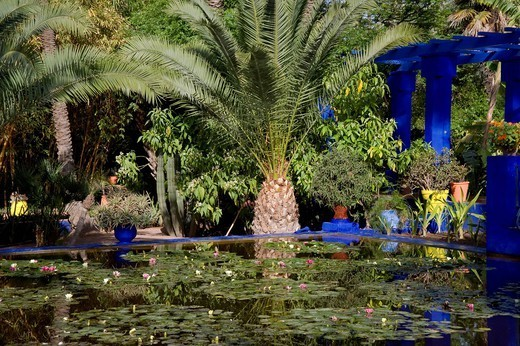 Tropical palms surrounding an ornamental pond containing water lilies at the Majorelle Garden in Marrakech, Morocco, North Africa, Africa : Stock Photo