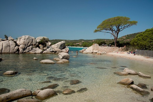 Palombaggia Beach near Porto_Vecchio, Corsica, France, Mediterranean, Europe : Stock Photo