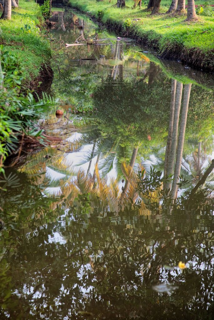 Stock Photo: 1890-152170 Reflection of palm trees in the still Kerala Backwaters, Kerala, India, Asia