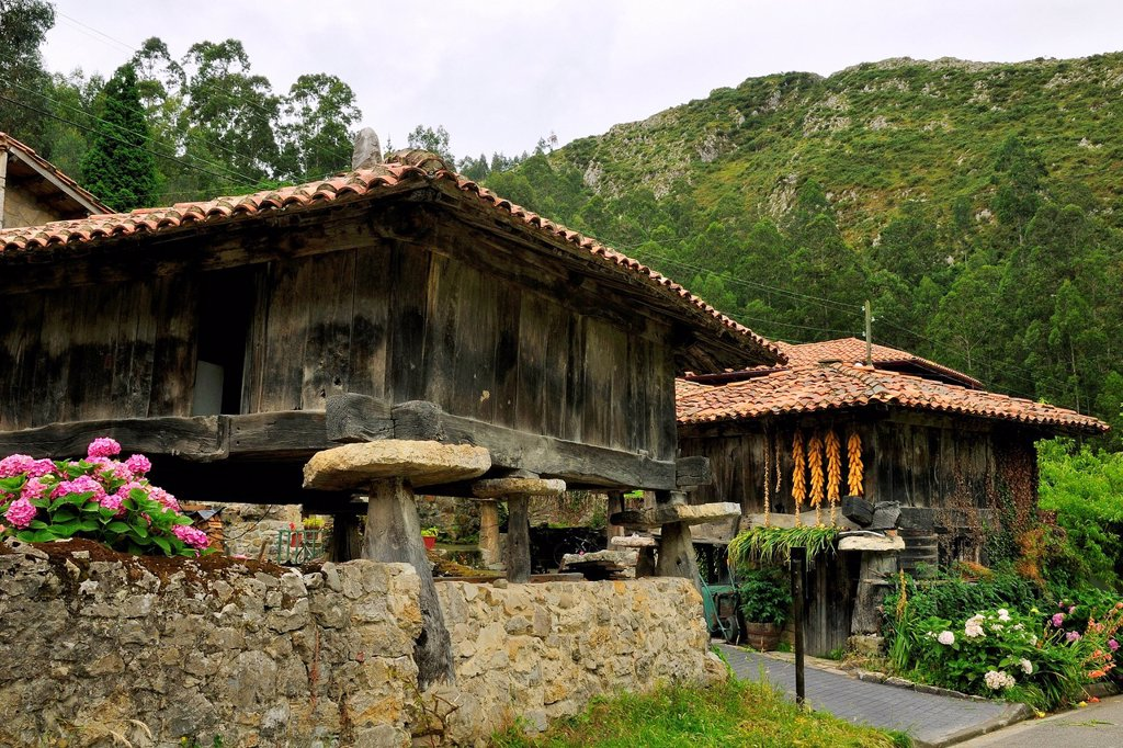 Horreo granaries on pillars topped with flat stones mueles to repel rodents, with maize cobs drying, Cuevas, Asturias, Spain, Europe : Stock Photo
