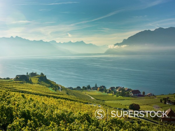 Stock Photo: 1890-157097 Lavaux terraced vineyards on Lake Geneva, Montreux, Canton Vaud, Switzerland, Europe