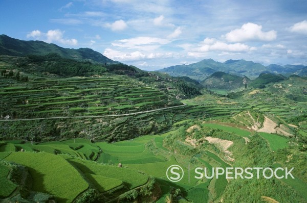 Terraced agricultural land between Taijiang and Fanpai, Guizhou Province, China, Asia : Stock Photo