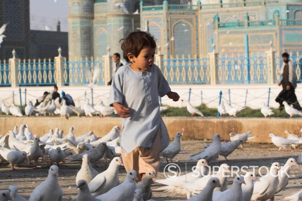 Child chasing the famous white pigeons, Shrine of Hazrat Ali, Mazar_I_Sharif, Balkh province, Afghanistan, Asia : Stock Photo