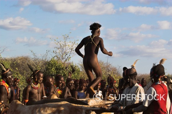Stock Photo: 1890-16664 Hamer Jumping of the Bulls initiation ceremony, naked initiate running over backs of bulls or cows, Turmi, Lower Omo valley, Ethiopia, Africa