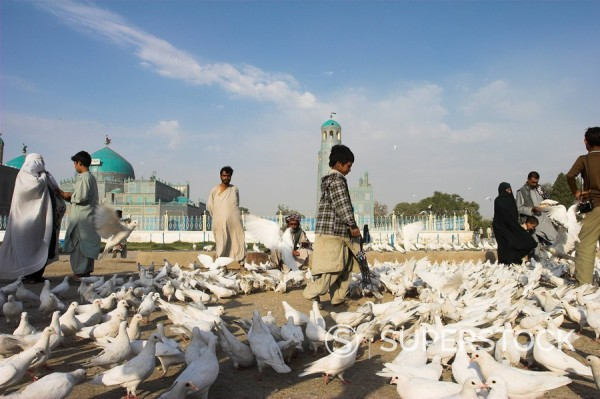 Stock Photo: 1890-16863 Street boy walks amongst the famous white pigeons, Shrine of Hazrat Ali, Mazar_I_Sharif, Afghanistan, Asia
