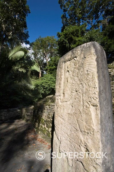 Stela 9 erected in AD 625 to commemorate the accession of Lord Smoking Shell in 608, shown in ceremonial regalia, Lamanai, Belize, Central America : Stock Photo