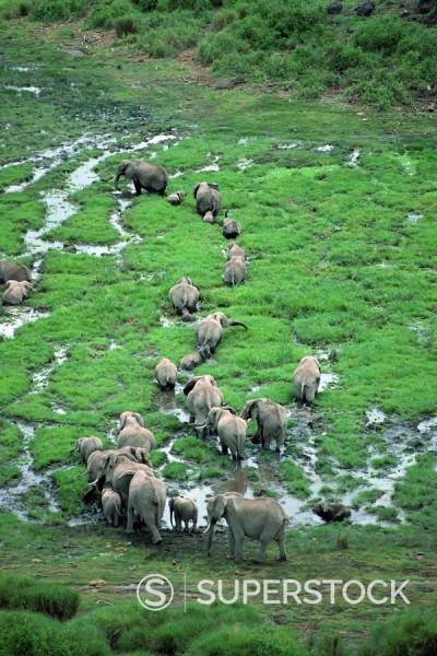 Elephant, Amboseli National Park, Kenya, East Africa, Africa : Stock Photo