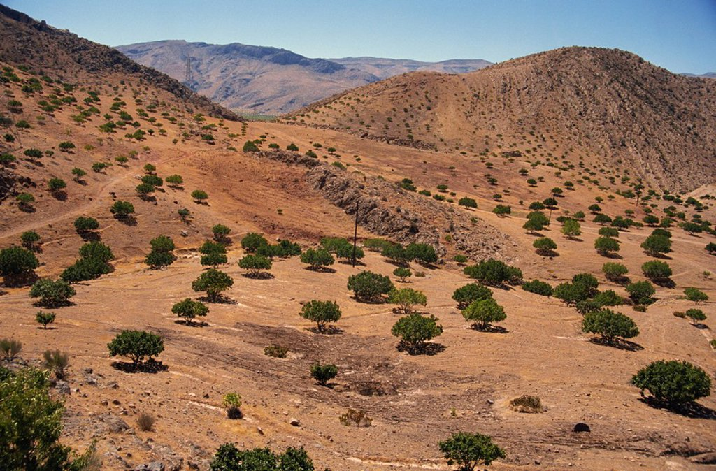 Aerial view over Fars Province landscape, with olive trees, Iran, Middle East : Stock Photo