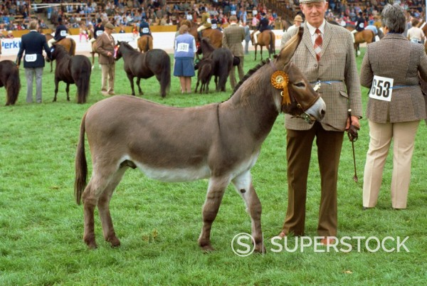 Stock Photo: 1890-18994 Donkey parade, agricultural show, England, United Kingdom, Europe